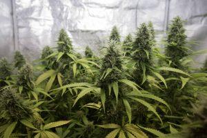 Raport narkotykowy UNODC   nowe narkotyki, nowe rynki, nowe różnice, GrowEnter