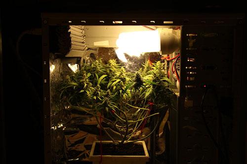 Plantacja konopi w komputerze, GrowEnter