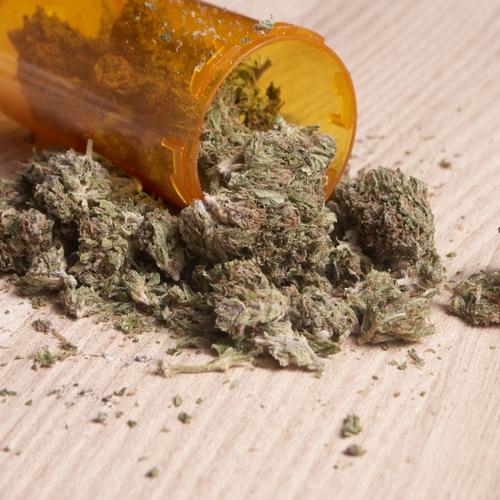 Marihuana najpopularniejszym narkotykiem w Europie, GrowEnter