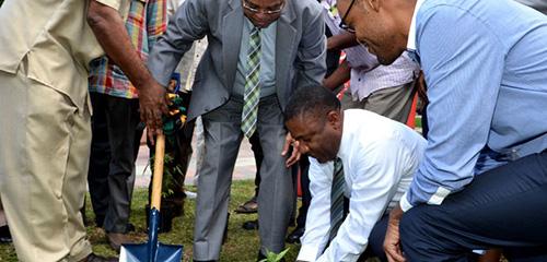 Jamajka sadzi pierwszą legalną roślinę konopi indyjskich, GrowEnter