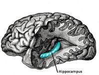 Naukowcy odkryli jak marihuana pomaga w rozwoju mózgu, GrowEnter