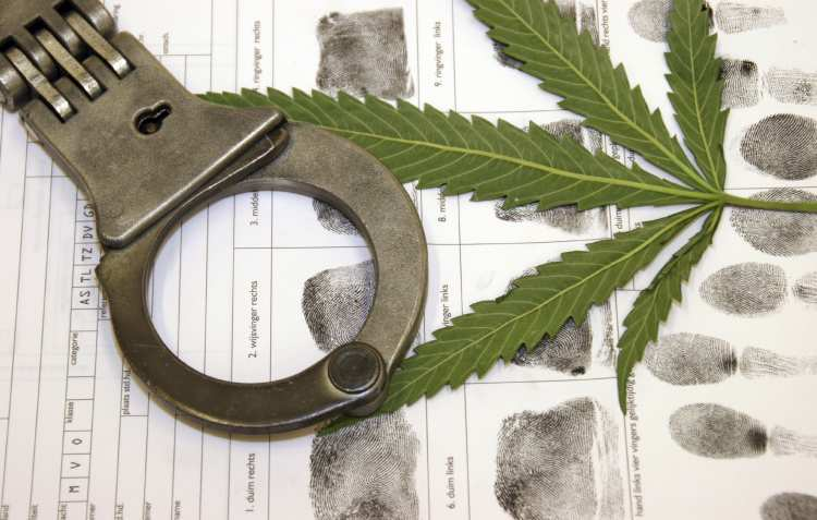 5 powodów dlaczego zakaz marihuany jest głupi, GrowEnter