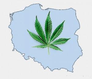 5 powodów dlaczego zakaz marihuany jest głupi , GrowEnter