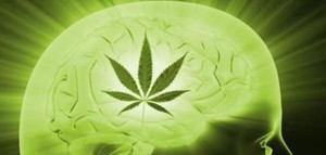 Badania potwierdzają: Marihuana zwiększa poziom IQ, GrowEnter
