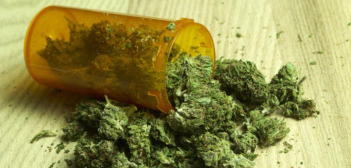 Lecznicza marihuana nadal mało popularna w Czechach. Dlaczego?, GrowEnter