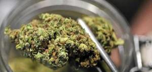 Pacjenci, którzy używają medycznej marihuany rzadziej sięgają po leki na receptę, GrowEnter