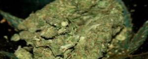 Czym zanieczyszcza się marihuanę?, GrowEnter