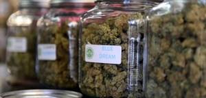 Urugwaj będzie produkował 6 10 ton marihuany w miesiącu , GrowEnter