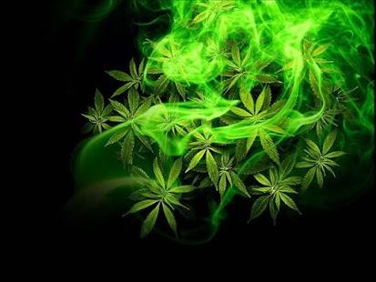 Marihuana zwiększa szum neuronalny, GrowEnter