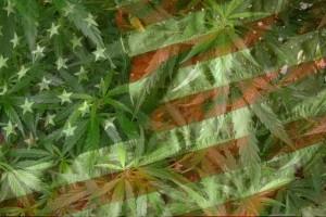 Większość Amerykanów popiera legalizację marihuany, GrowEnter