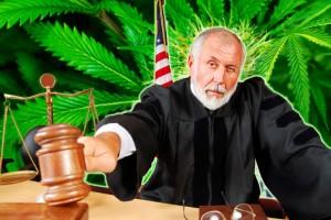 Uprawiał 30 krzaków marihuany – sędzia wymierzył karę w wysokości 1,30$, GrowEnter