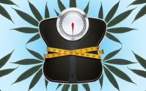 Czy palenie marihuany zapobiega wzrostowi masy ciała?, GrowEnter