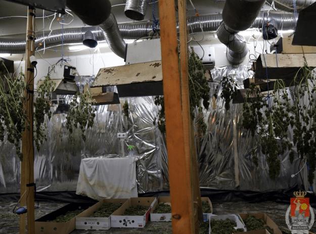 Zakład pogrzebowy zamienili na plantację marihuany, GrowEnter