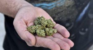 Efekt legalizacji: Młodzież ma większy problem z dostaniem marihuany, GrowEnter