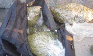 Kraków: Kontrolerzy biletów znaleźli plecak z marihuaną, GrowEnter