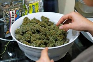 Holandia bliżej pełnej legalizacji marihuany, GrowEnter