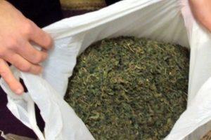 Zatrzymania w Berlinie z powodu 19kg Cannabisu, GrowEnter