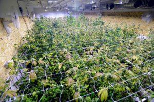 Wymagania optymalnego growroomu, GrowEnter