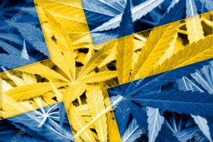 Szwecja: pierwsi pacjenci otrzymują medyczną marihuanę, GrowEnter