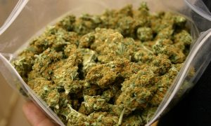 Austria: 2 kilo marihuany zapomniane w pociągu, GrowEnter