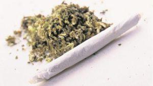 Niemcy zrobią pierwsze badania cannabisu za 800.000 euro, GrowEnter