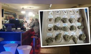 Hiszpania: Katalonia legalizuje Cannabis Social Clubs, GrowEnter