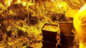 Niemcy: dom, w którym niegdyś przez lata molestowano kobiety użyty jako plantacja marihuany, GrowEnter