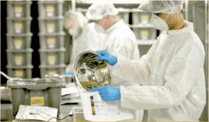 Tilray otrzymał licencję na produkcję medycznej w Portugalii, GrowEnter
