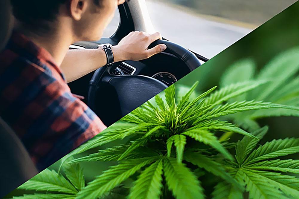 Badania: Alkohol bardziej wpływa na zdolność prowadzenia samochodu niż marihuana, GrowEnter