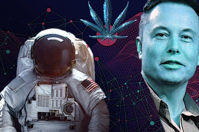 Dlaczego Elon Musk Chce Wysłać w Kosmos Cannabis?, GrowEnter
