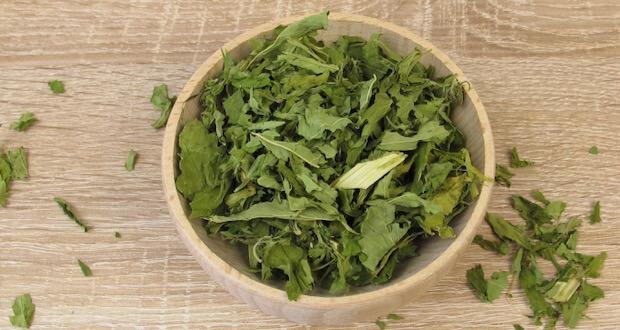 Herbata Konopna Może Wywoływać High, GrowEnter