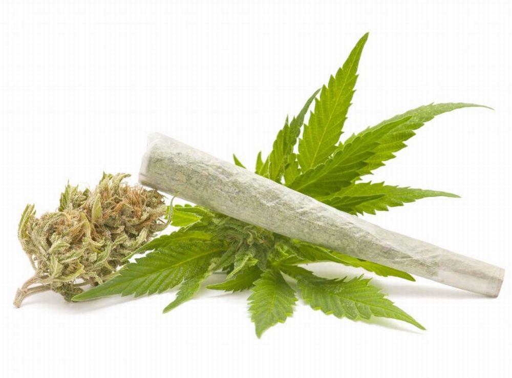 Kolejne Dowody   Marihuana nie Pogarsza Pracy Mózgu, GrowEnter