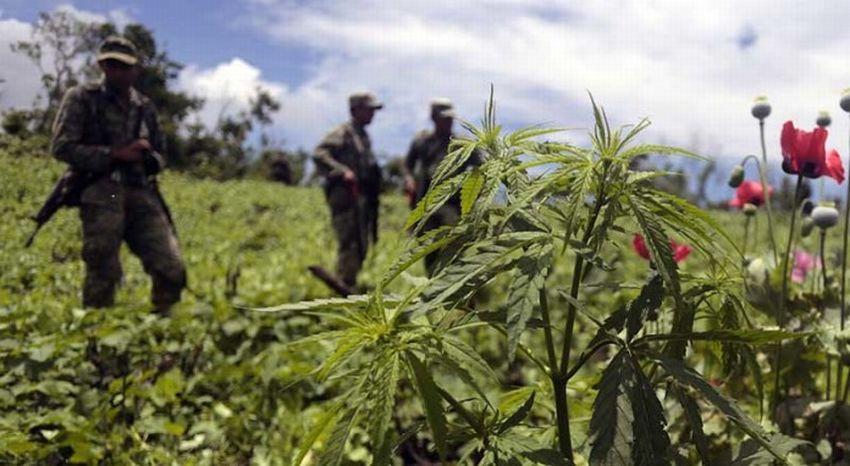 Marihuana nie szkodzi płucom tak, jak tytoń. Wynik 20 letnich badań, GrowEnter