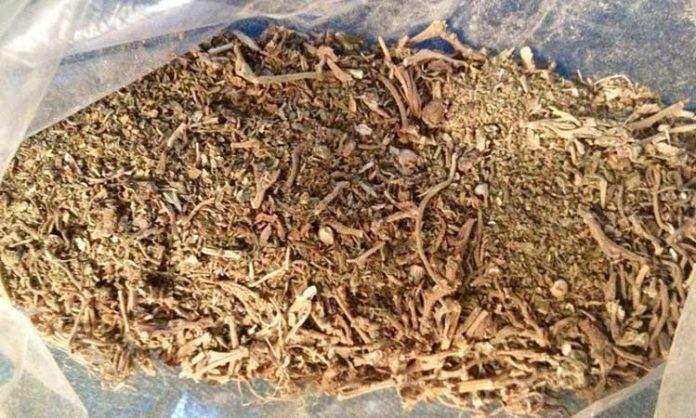 Nowe Analizy Potwierdzają, że Cannabis Jest Jedną z Najstarszych Roślin Uprawnych na Świecie, GrowEnter
