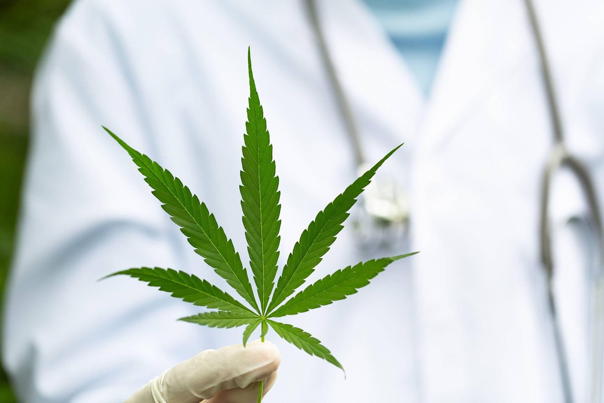 Cannabis, Konopia i THC, GrowEnter