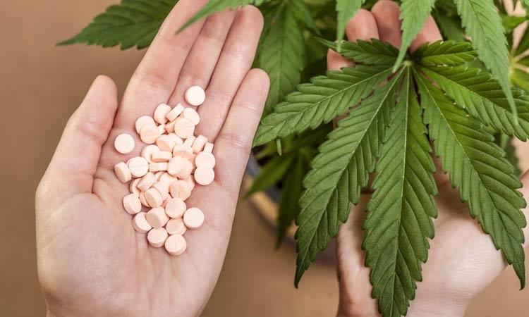 Ogólne Informacje na Temat Jak Otrzymać w Niemczech Receptę na Medyczną Marihuanę, GrowEnter