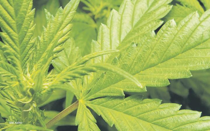 Meksyk Legalizuje Posiadanie Oraz Handel Marihuaną, GrowEnter