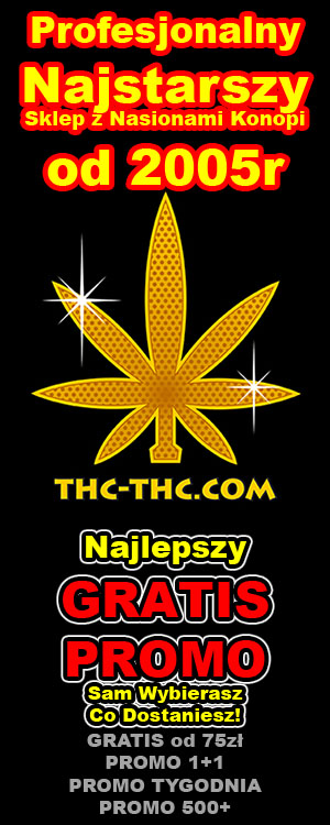 nasiona marihuany thc, konopi, feminizowane i automatyczne, indoor, outdoor