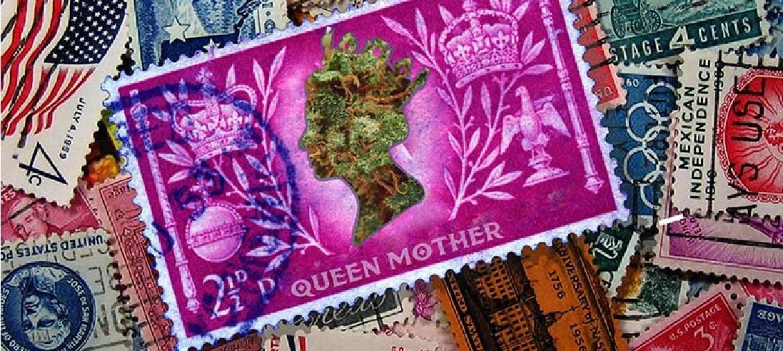 Jak Wybrać Odpowiednią Roślinę Matkę?, GrowEnter