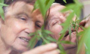 Para 60 latków zatrzymana za uprawę marihuany oraz posiadanie kilograma cannabisu, GrowEnter