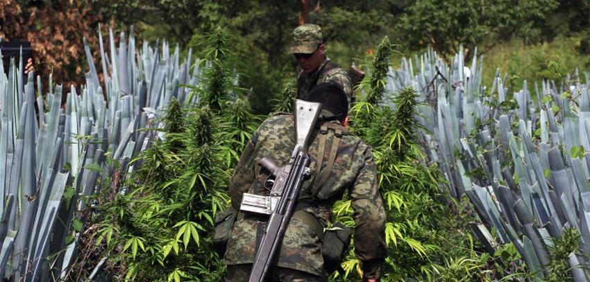 Ponad 3.000 ofiar narkotykowej wojny, GrowEnter