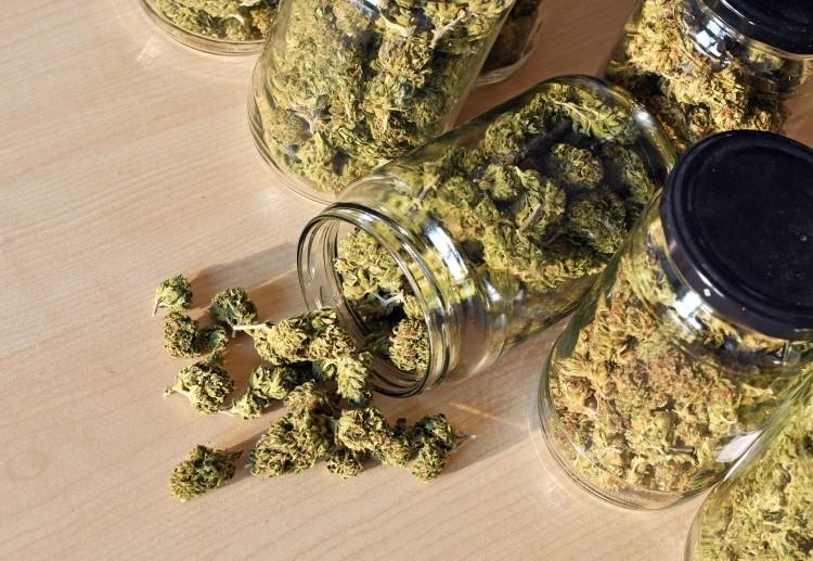 Sprzedaż Cannabisu w USA Eksploduje, GrowEnter